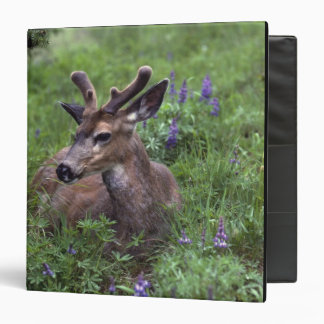 USA, Washington, Olympic National Park. Deer 3 Ring Binders