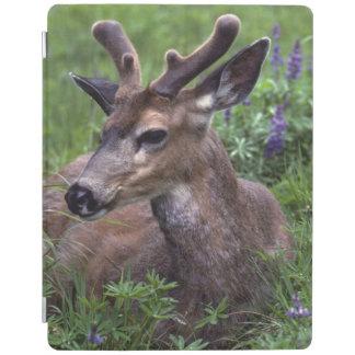 USA, Washington, Olympic National Park. Deer iPad Cover