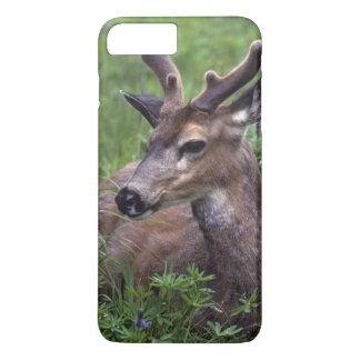 USA, Washington, Olympic National Park. Deer iPhone 7 Plus Case