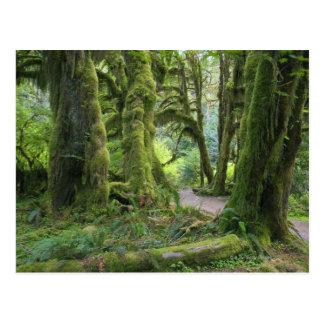 USA, Washington, Olympic National Park, Hoh Rain Postcard