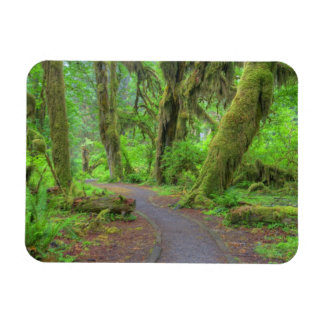 USA, Washington, Olympic National Park, Hoh Rain Rectangular Photo Magnet