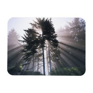 USA, Washington, Olympic National Park, Morning Rectangular Photo Magnet