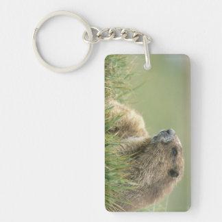 USA, Washington, Olympic NP, Olympic Marmot Double-Sided Rectangular Acrylic Keychain