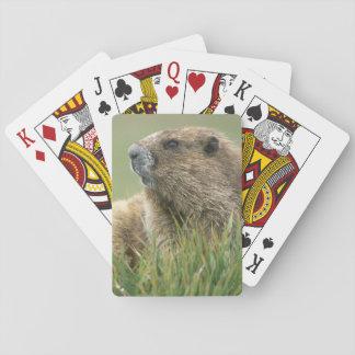 USA, Washington, Olympic NP, Olympic Marmot Playing Cards