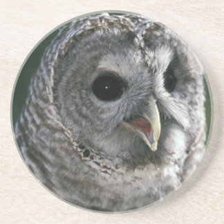 USA, Washington State. Barred Owl (Strix varia) Drink Coaster