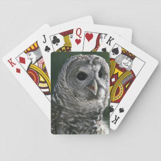 USA, Washington State. Barred Owl (Strix varia) Poker Deck