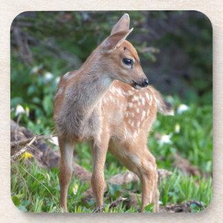 USA, Washington State. Blacktail Deer Fawn Beverage Coaster