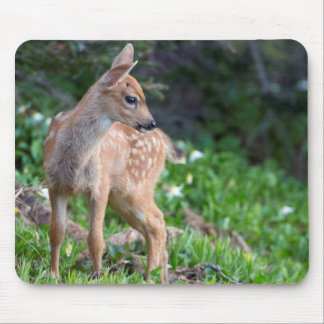 USA, Washington State. Blacktail Deer Fawn Mouse Pads