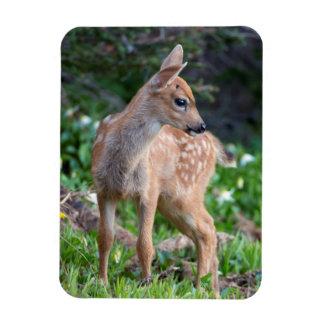 USA, Washington State. Blacktail Deer Fawn Vinyl Magnet