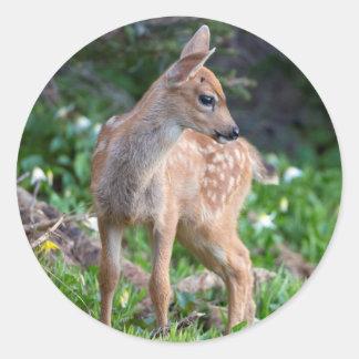 USA, Washington State. Blacktail Deer Fawn Round Sticker