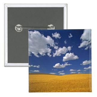 USA, Washington State, Colfax. Ripe barley meets 2 Inch Square Button