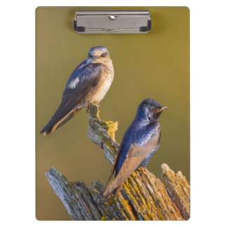 USA, Washington State. Female And Male Purple Clipboards