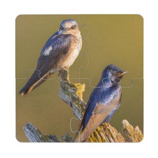 USA, Washington State. Female And Male Purple Drink Coaster Puzzle