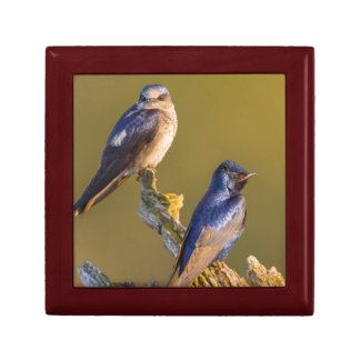 USA, Washington State. Female And Male Purple Gift Box