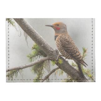 USA, Washington State. Male Northern Flicker 2 Tyvek® Card Wallet