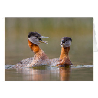 USA, Washington State. Mated Red-Necked Grebes Greeting Cards