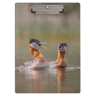USA, Washington State. Mated Red-Necked Grebes Clipboards