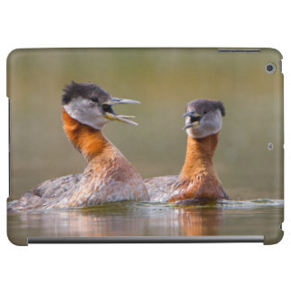 USA, Washington State. Mated Red-Necked Grebes iPad Air Cases