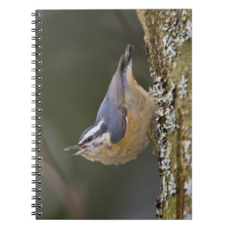 USA Washington State Red-brested Nuthatch Notebooks