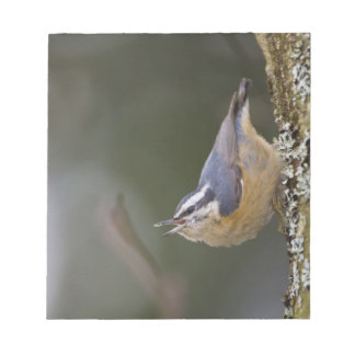 USA, Washington State, Red-brested Nuthatch, Notepads