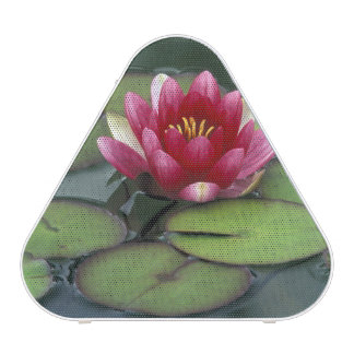 USA, Washington State, Seattle. Water lily and Blueooth Speaker