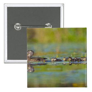 USA Washington State Wood Duck female Pinback Buttons