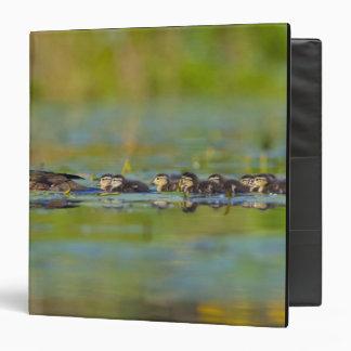 USA, Washington State, Wood Duck,female, Vinyl Binder