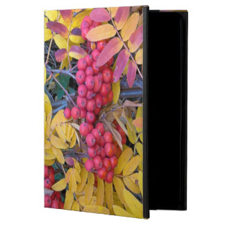 USA, Washington, Western Mountain Ash, Okanogan iPad Air Cover