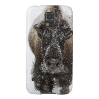 USA, WY, Yellowstone NP, American Bison (Bison Galaxy S5 Case