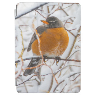 USA, Wyoming, American Robin roosting on willow iPad Air Cover