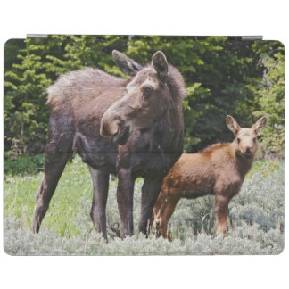 USA, Wyoming, Bighorn Mountains, moose Alces iPad Cover