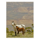 USA, Wyoming, Carbon County. Wild horse mare Postcard