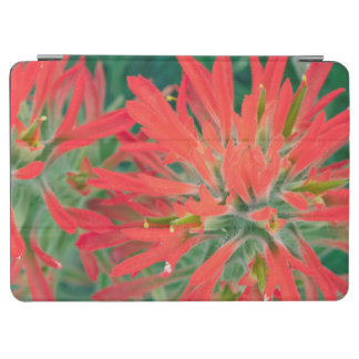 USA, Wyoming, Close-up of Desert Paintbrush iPad Air Cover