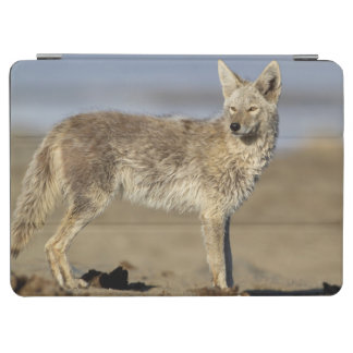 USA, Wyoming, Coyote standing on beach iPad Air Cover