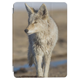 USA, Wyoming, Coyote walking on beach iPad Air Cover