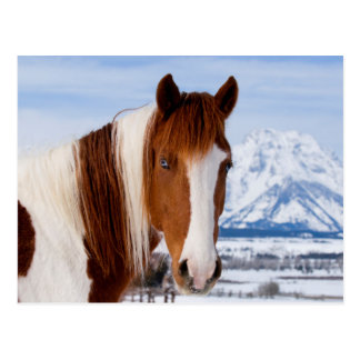 USA, Wyoming, Grand Teton National Park 3 Postcard