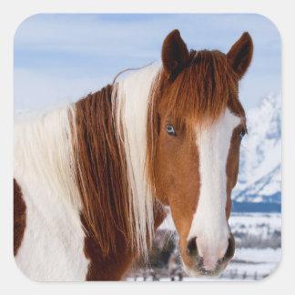 USA, Wyoming, Grand Teton National Park 3 Square Sticker