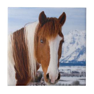 USA, Wyoming, Grand Teton National Park 3 Tile
