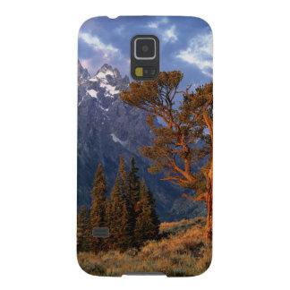 USA, Wyoming, Grand Teton NP. A lone cedar Cases For Galaxy S5