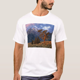USA, Wyoming, Grand Teton NP. A lone cedar T-Shirt