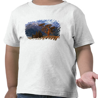 USA, Wyoming, Grand Teton NP. A lone cedar Tee Shirt
