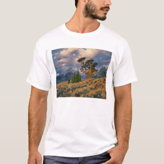 USA, Wyoming, Grand Teton NP. Sunrise greets a T-Shirt