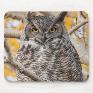 USA, Wyoming, Great Horned Owl roosting Mouse Pad