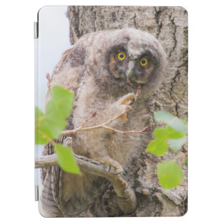 USA, Wyoming, Long-eared Owl chick iPad Air Cover