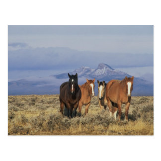USA, Wyoming, near Cody Group of horses, Heart Postcard
