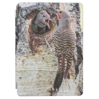 USA, Wyoming, Northern Flicker male feeding iPad Air Cover