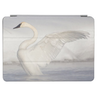 USA, Wyoming, Trumpeter Swan stretches wings iPad Air Cover