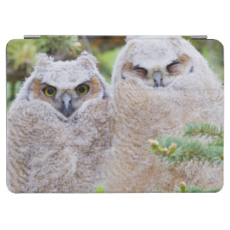 USA, Wyoming, two fledged Great Horned Owl iPad Air Cover