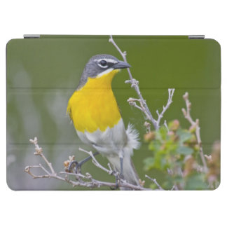 USA, Wyoming, Yellow-breasted Chat Icteria 2 iPad Air Cover