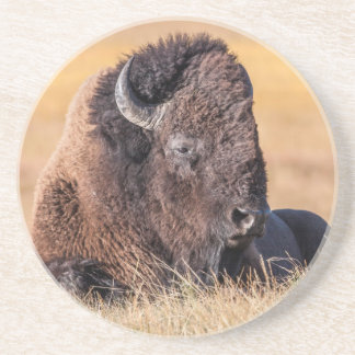 USA, Wyoming, Yellowstone National Park, Bison Coaster